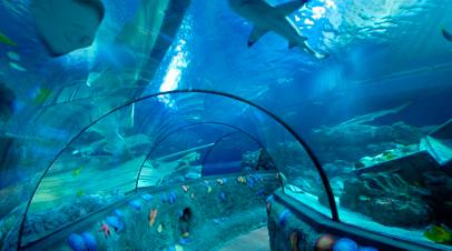 sealife vissen