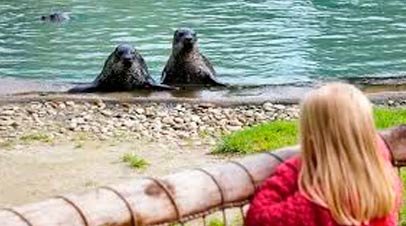 aqua zoo friesland zeehondjes
