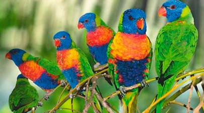 avifauna vogels