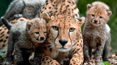 luipaarden dierentuin