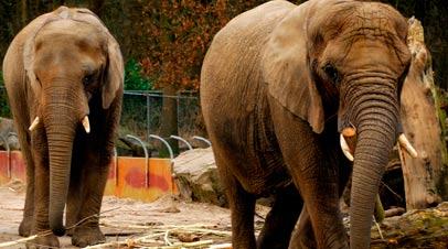 dierenpark olifanten