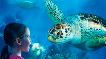 sealife schildpad
