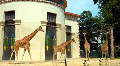 zoo antwerpen giraffen